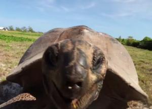 Разборка с черепахой на Сейшелах