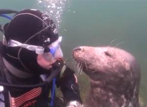Удивительная дружба человека и тюленя!