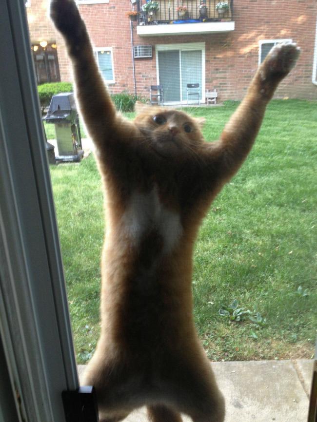 Cat-Stick-On-A-Screen-Door