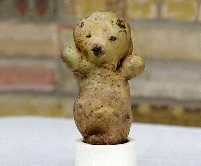 Frutas-y-verduras-de-figuras-raras-que-parecen-otra-cosa-4