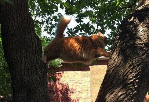 Kitty-Stuck-In-A-Tree