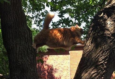 Kitty-Stuck-In-A-Tree