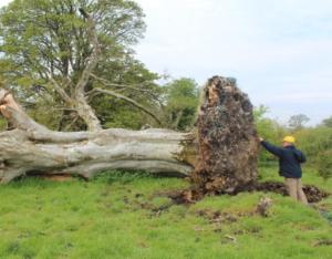 Страшная находка на месте поваленного дерева