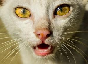 Новость, которая не обрадует владельцев кошек…