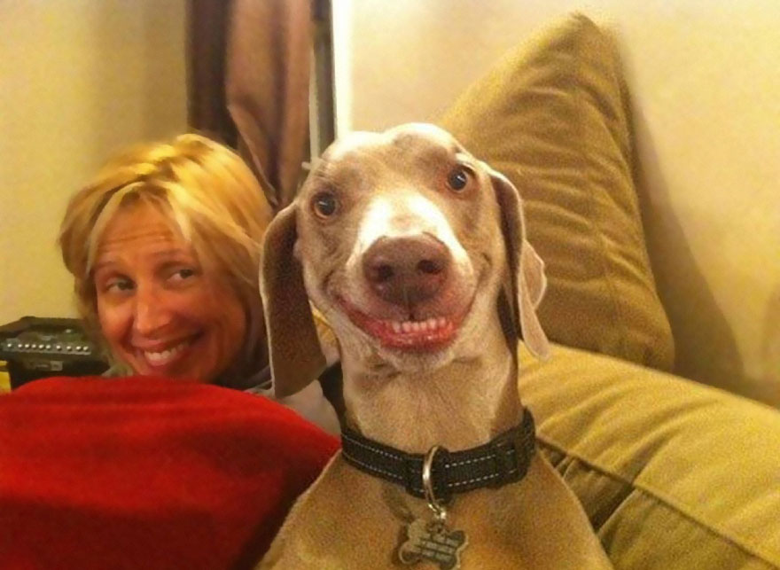 post-the-happiest-dogs-who-show-the-best-smiles-15__880