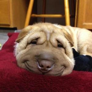 Позитивный пост: 8 самых улыбчивых собак