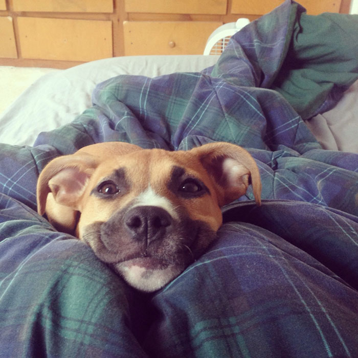 post-the-happiest-dogs-who-show-the-best-smiles-20__700