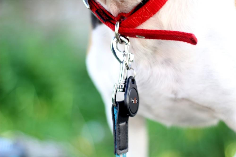 dog-itag-slider