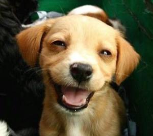 Доказано: собаки умеют улыбаться