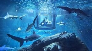 Ночь в Париже. Среди 35 акул.